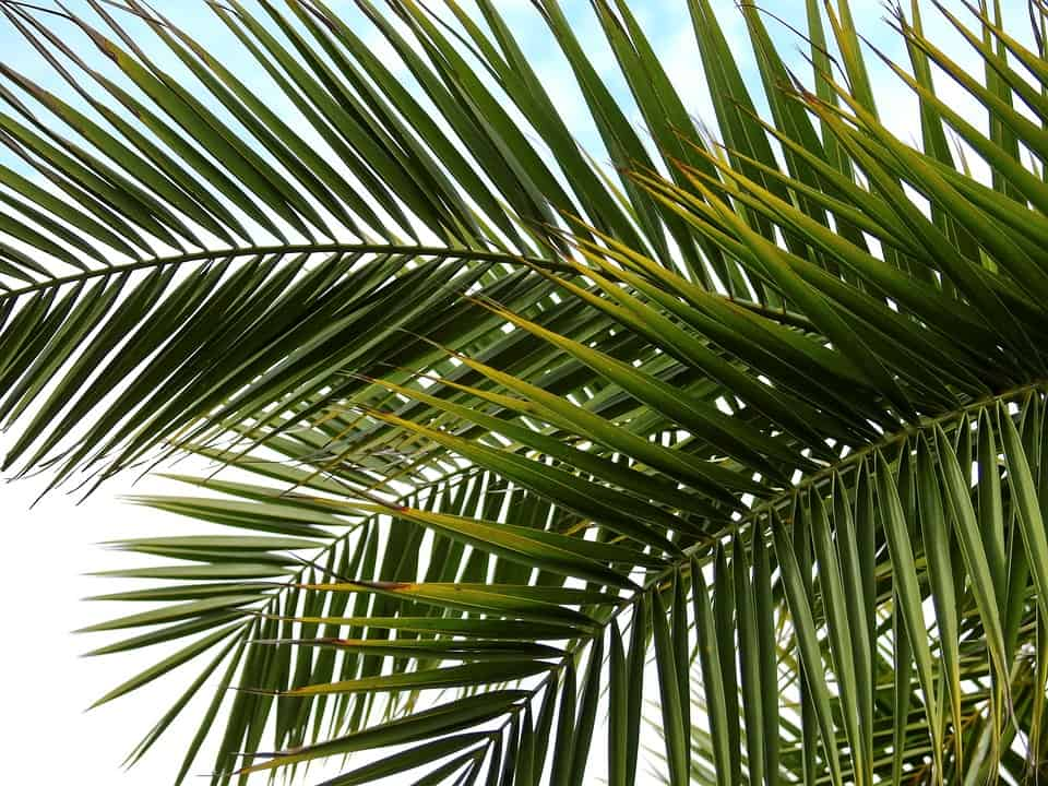From Ashes to Palms