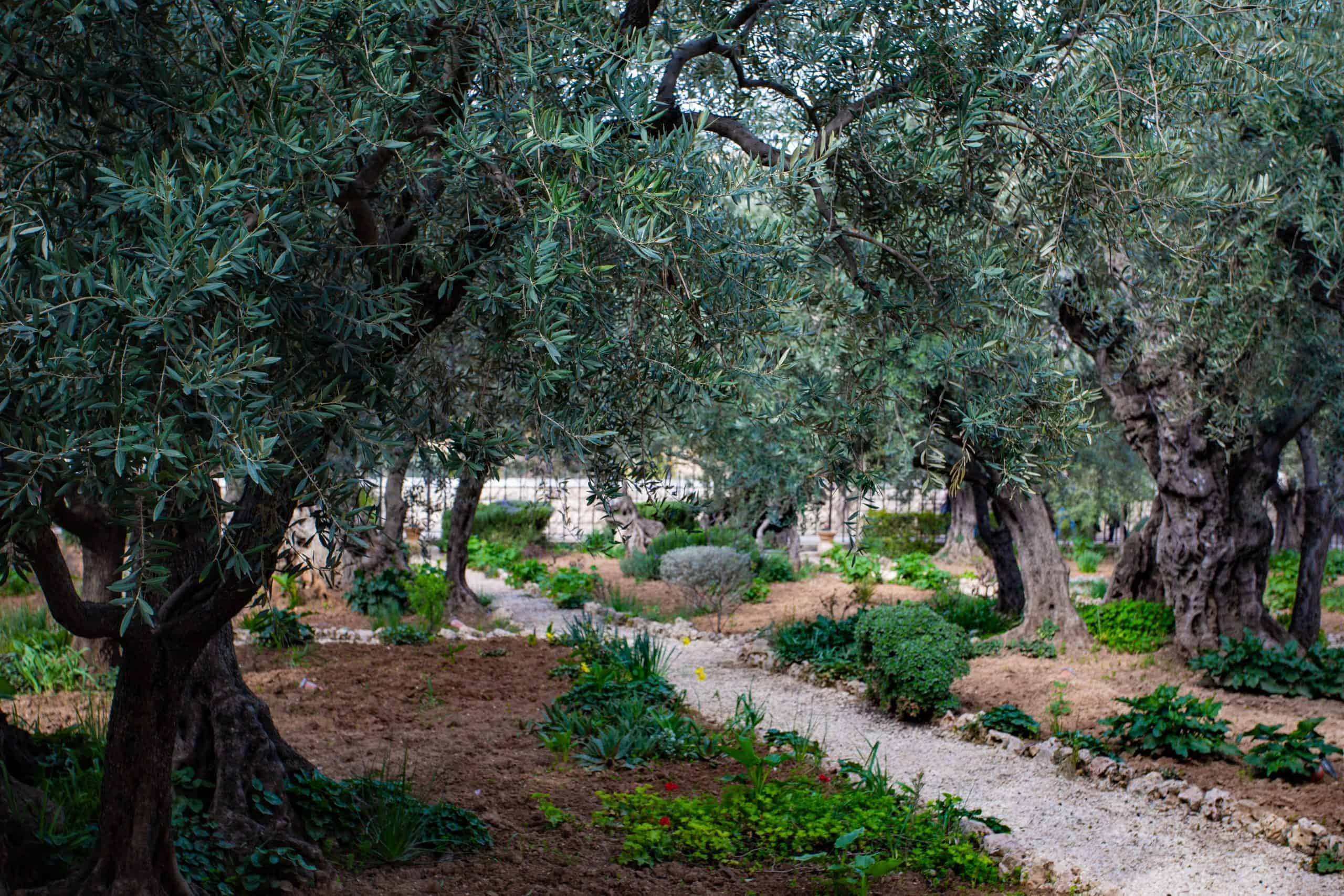 Did You Know? 5 Surprising Facts About the Holy Land